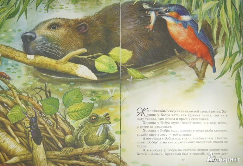 Иллюстрация 1 из 26 для Сказки - Виталий Бианки | Лабиринт - книги. Источник: Лабиринт