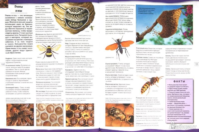 Иллюстрация 1 из 16 для Энциклопедический словарь школьника | Лабиринт - книги. Источник: Лабиринт