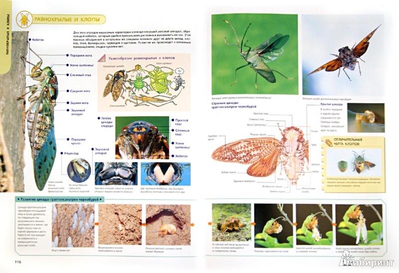 Иллюстрация 1 из 39 для Самые красивые в мире: бабочки, жуки, стрекозы, цикады, кузнечики, пауки и скорпионы | Лабиринт - книги. Источник: Лабиринт