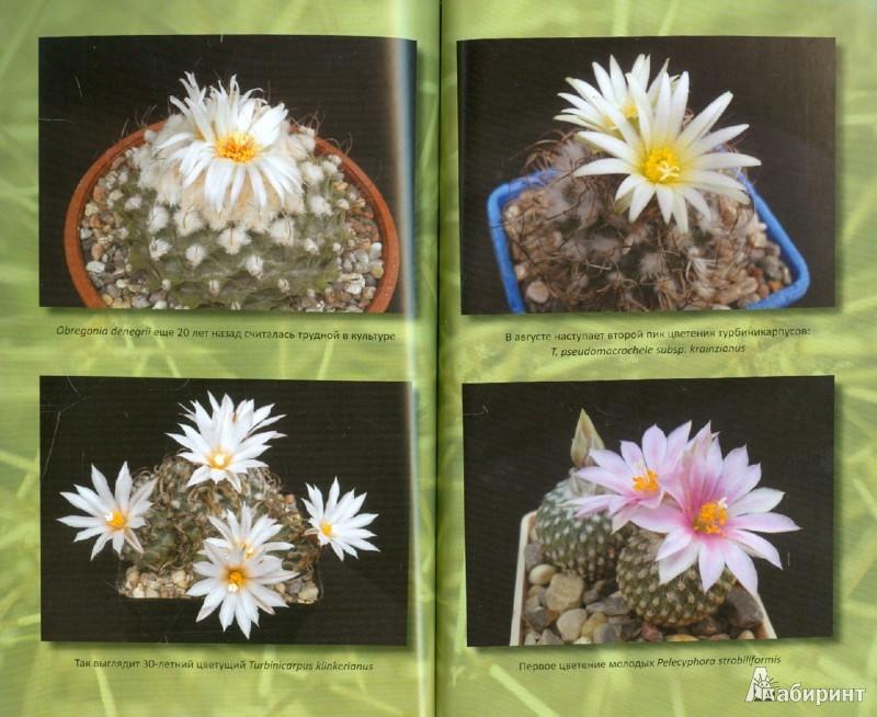 Иллюстрация 1 из 6 для Круглый год среди кактусов: советы по уходу за коллекцией - Дмитрий Демин | Лабиринт - книги. Источник: Лабиринт