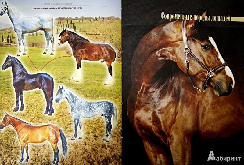 Иллюстрация 1 из 11 для Лошади и пони - Владимир Жабцев | Лабиринт - книги. Источник: Лабиринт