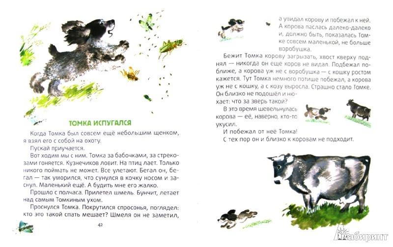 Иллюстрация 1 из 16 для Тюпа, Томка и Сорока - Евгений Чарушин | Лабиринт - книги. Источник: Лабиринт