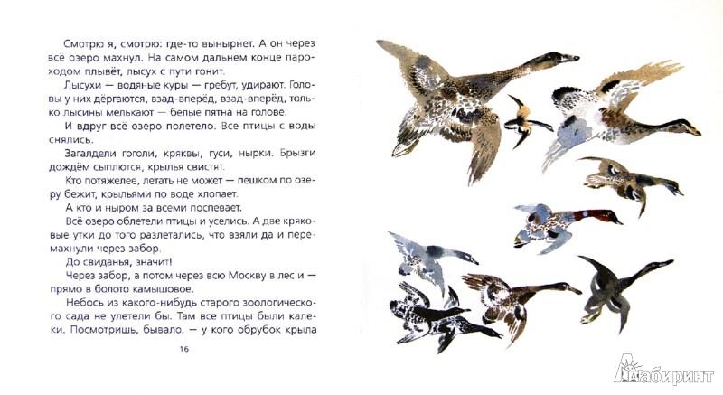 Иллюстрация 1 из 12 для Птичье озеро - Евгений Чарушин   Лабиринт - книги. Источник: Лабиринт