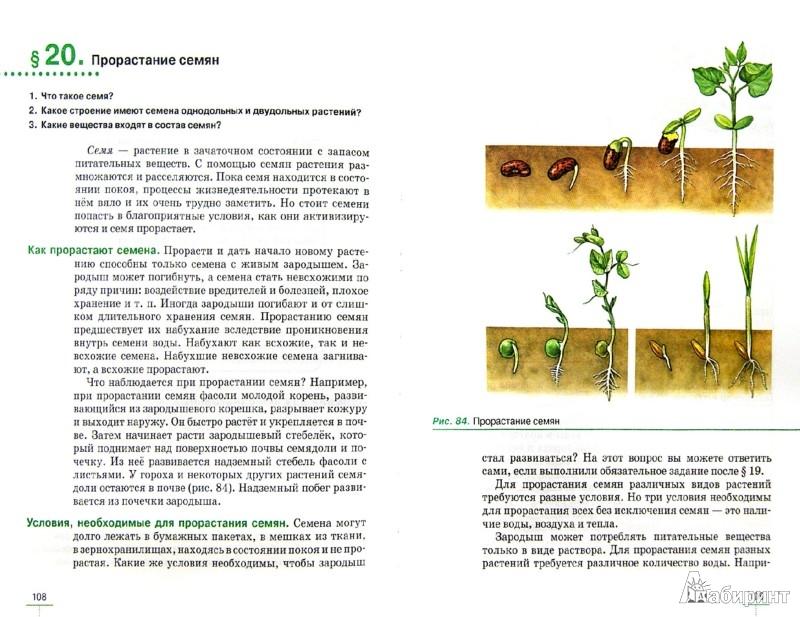 Покрытосеменных растений 6 класс