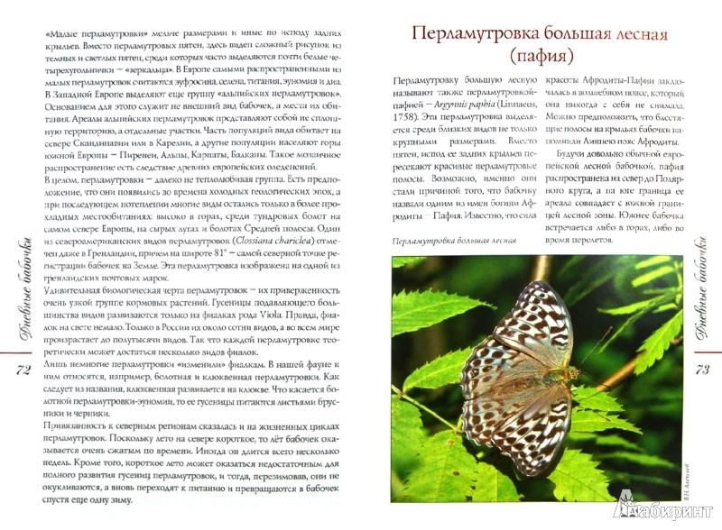 Иллюстрация 1 из 25 для Бабочки средней полосы России: Дневные и ночные - Алексеев, Бабенко | Лабиринт - книги. Источник: Лабиринт