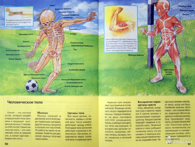 Иллюстрация 1 из 8 для книги детская