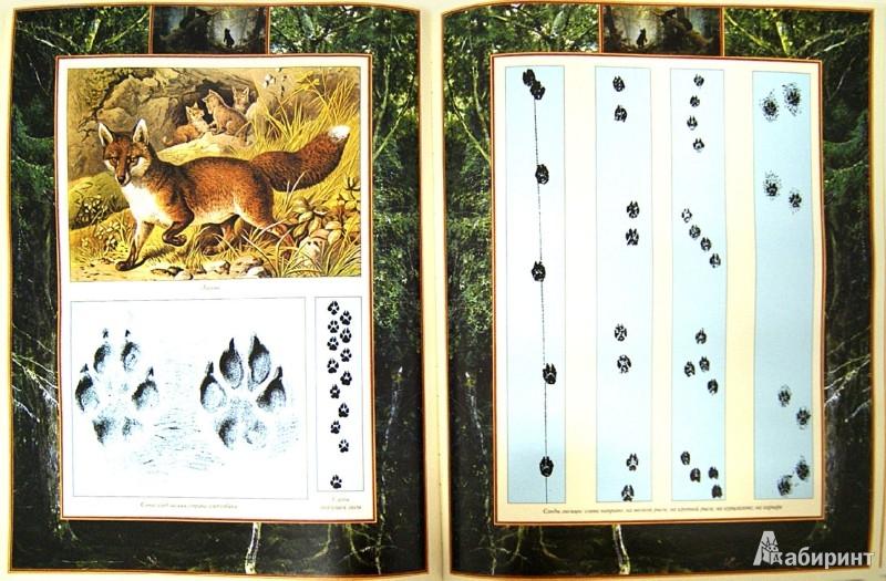 Иллюстрация 1 из 8 для Настольная книга охотника | Лабиринт - книги. Источник: Лабиринт