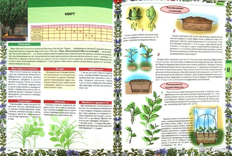 Иллюстрация 1 из 15 для Самая нужная книга о комнатных растениях - Лариса Конева | Лабиринт - книги. Источник: Лабиринт