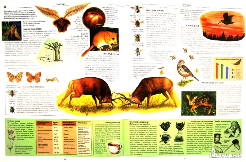Иллюстрация 1 из 29 для Природа нашей Родины. Иллюстрированная энциклопедия - Eyal, Андера | Лабиринт - книги. Источник: Лабиринт