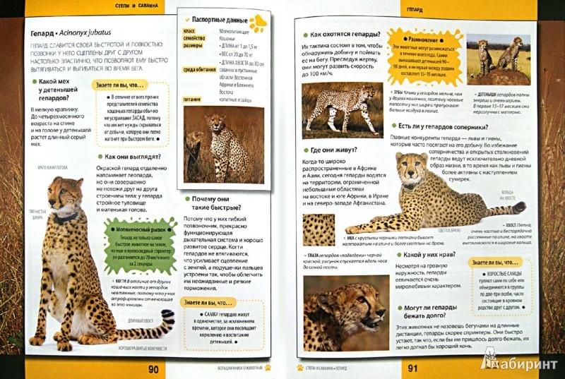 Иллюстрация 1 из 35 для Животные - Каневаро, Джудичи, Ратто | Лабиринт - книги. Источник: Лабиринт