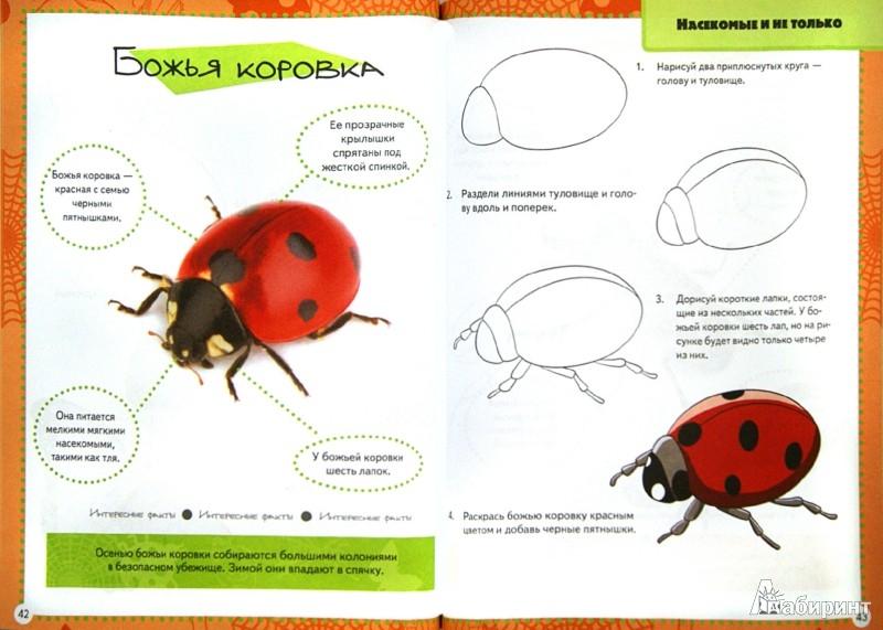 Иллюстрация 1 из 7 для Нарисуй-ка! Любая картинка - в 4 простых шага | Лабиринт - книги. Источник: Лабиринт
