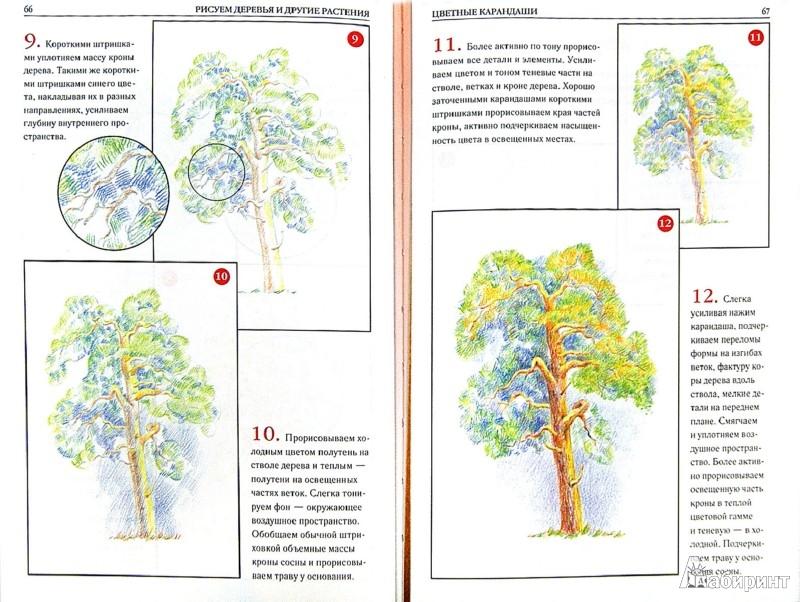 Иллюстрация 1 из 25 для Рисуем деревья и другие растения - Валентина Пенова | Лабиринт - книги. Источник: Лабиринт
