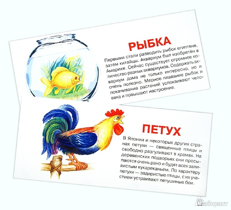 Иллюстрация 1 из 6 для Домашние животные. Набор карточек | Лабиринт - книги. Источник: Лабиринт