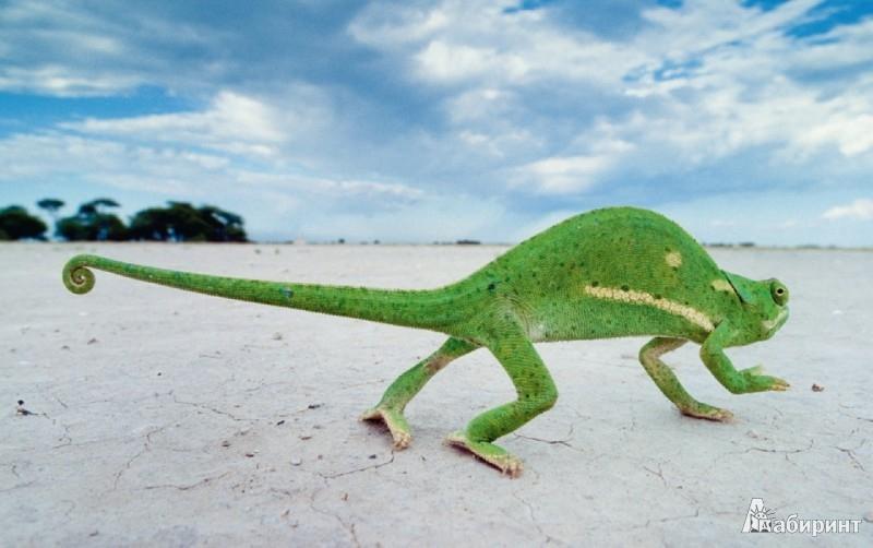Иллюстрация 1 из 7 для Frans Lanting. Okavango / Франс Лантинг. Живая Африки - Lanting, Cruz | Лабиринт - книги. Источник: Лабиринт