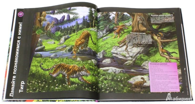 Иллюстрация 1 из 16 для Большие кошки | Лабиринт - книги. Источник: Лабиринт