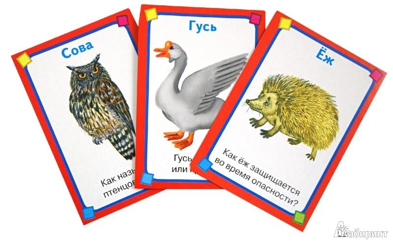 Иллюстрация 1 из 10 для Животные. Набор развивающих карточек   Лабиринт - книги. Источник: Лабиринт