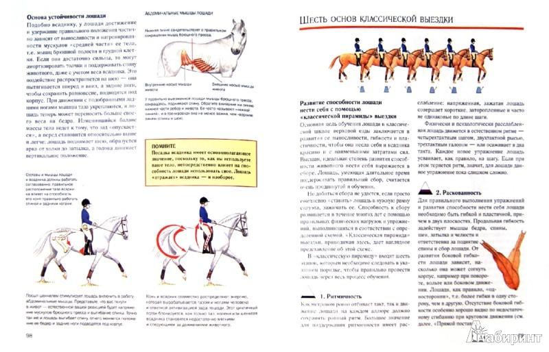 Рисунки наездников с лошадьми