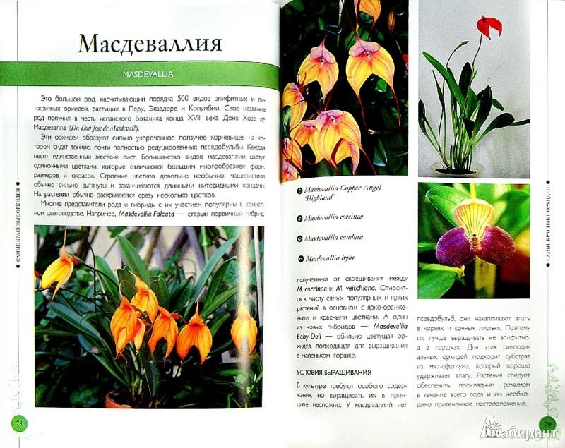 Иллюстрация 1 из 6 для Самые красивые орхидеи. Справочник цветовода - Ирина Зайцева | Лабиринт - книги. Источник: Лабиринт