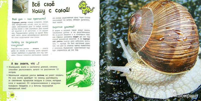 Иллюстрация 1 из 5 для Удивительные животные - Наталья Костина   Лабиринт - книги. Источник: Лабиринт