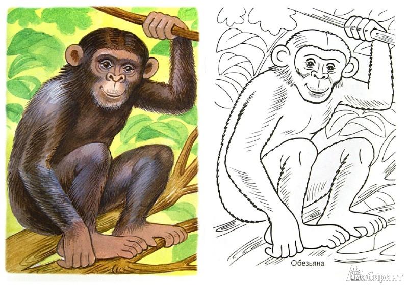 Картинки по точкам для детей дошкольного возраста