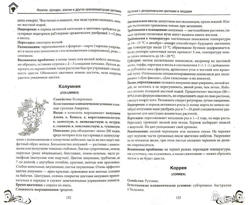 Иллюстрация 1 из 6 для Фиалки, орхидеи, азалии и другие красивоцветущие комнатные растения | Лабиринт - книги. Источник: Лабиринт