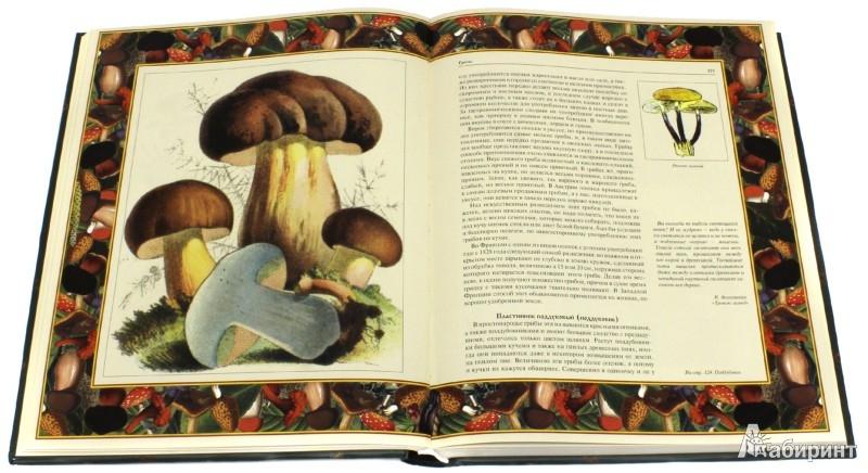 Иллюстрация 1 из 26 для Русский лес. Грибы и ягоды | Лабиринт - книги. Источник: Лабиринт