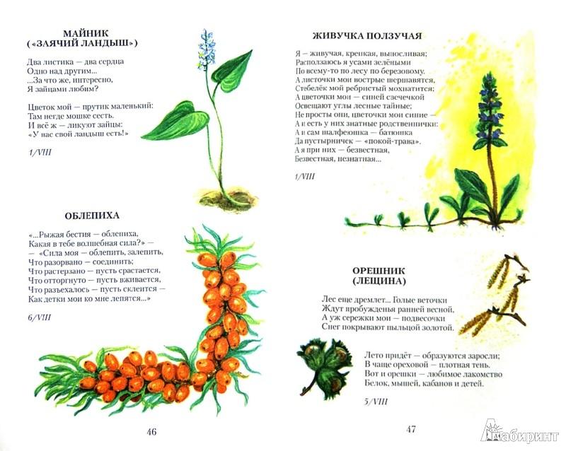 Иллюстрация 1 из 9 для Прекрасные дары флоры - Ирина Каширина | Лабиринт - книги. Источник: Лабиринт