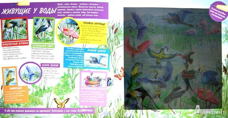 Иллюстрация 1 из 4 для Птицы. Книга-игра | Лабиринт - книги. Источник: Лабиринт