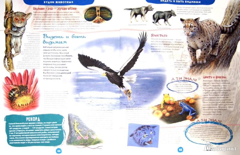 Иллюстрация 1 из 6 для Иллюстрированная энциклопедия животных - Юдит Денс | Лабиринт - книги. Источник: Лабиринт