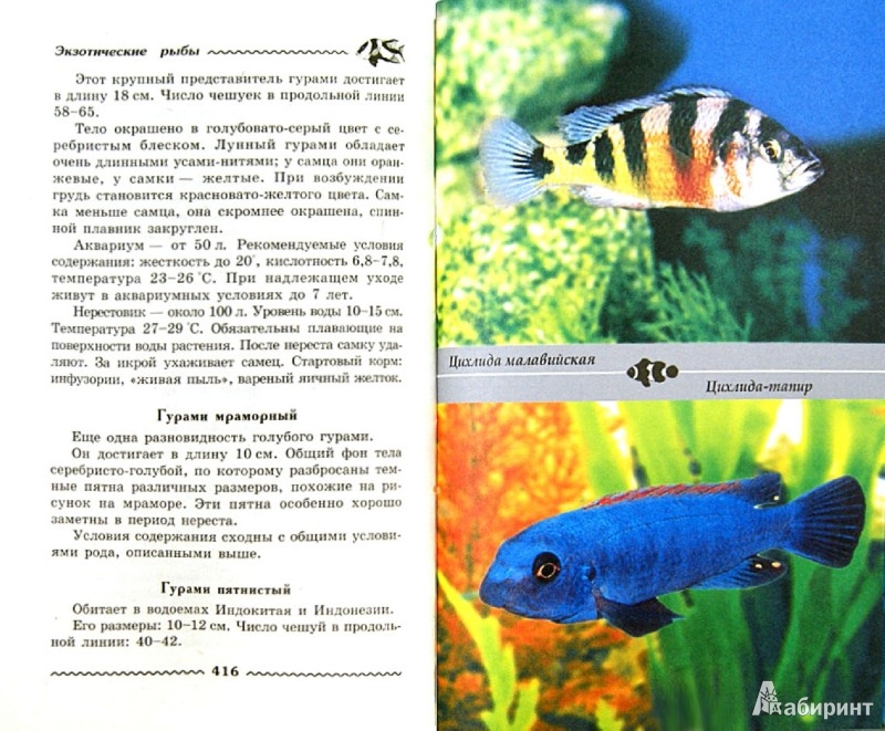 Аквариум и аквариумные рыбки. Золотые советы для ...: http://shop.armada.ru/books/397749/