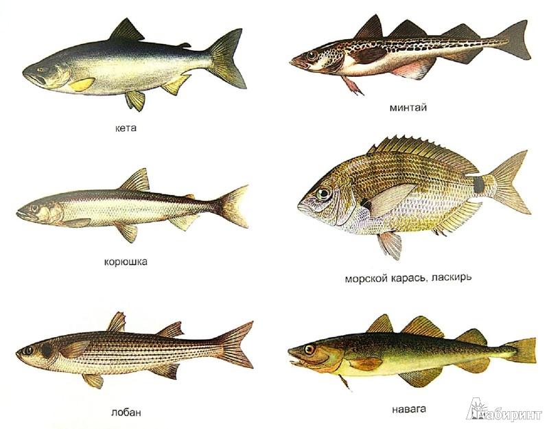 секрет рыбалки