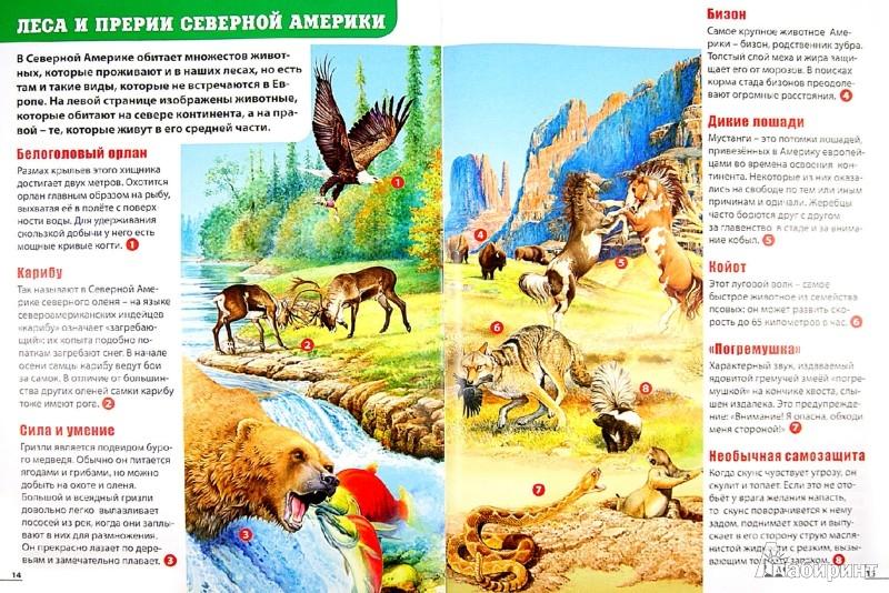 Иллюстрация 1 из 37 для Детский атлас животных - Мариуш Любка   Лабиринт - книги. Источник: Лабиринт