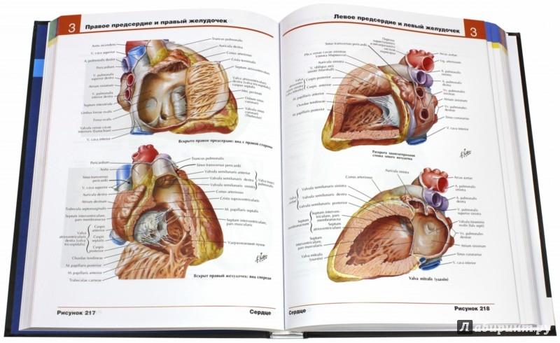 Атлас анатомии человека неттер фрэнк 2003 год 548 с.