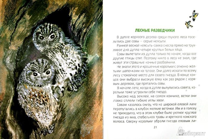 Иллюстрация 1 из 45 для Лесные разведчики - Виталий Бианки | Лабиринт - книги. Источник: Лабиринт