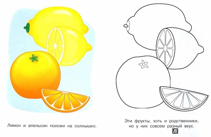 Иллюстрация 1 из 14 для Фрукты и ягоды. Малинка | Лабиринт - книги. Источник: Лабиринт