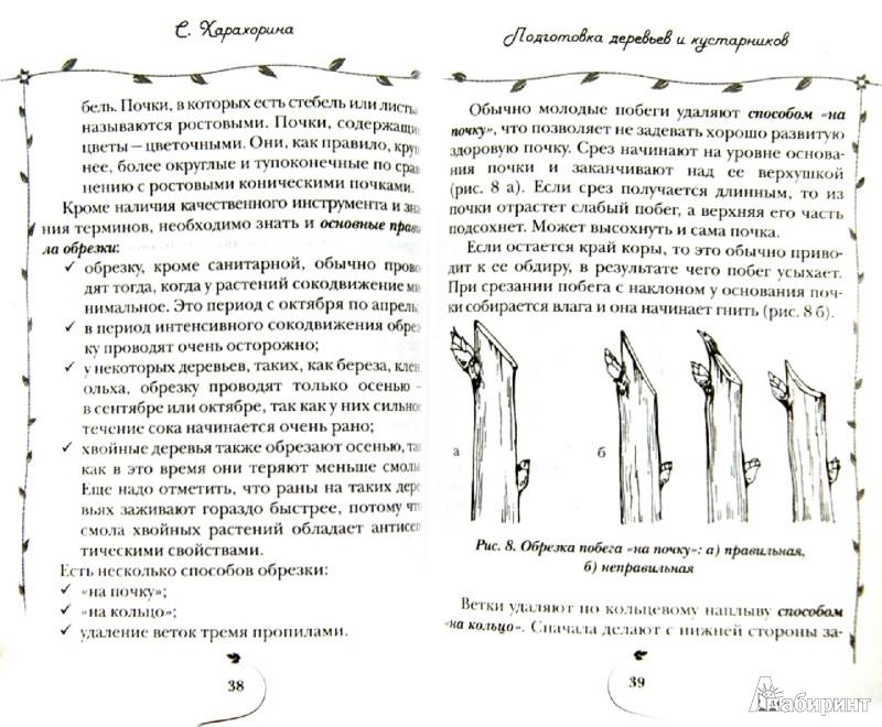 Иллюстрация 1 из 9 для Подготовка сада к зиме - Светлана Харахорина   Лабиринт - книги. Источник: Лабиринт