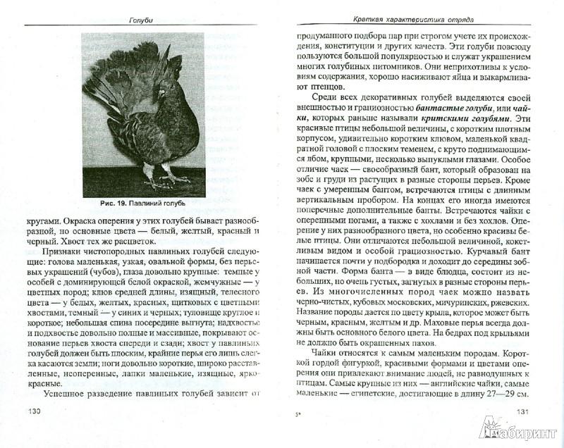 Иллюстрация 1 из 11 для Голуби. Обзор видов. Содержание. Кормление. Разведение - Александр Рахманов | Лабиринт - книги. Источник: Лабиринт