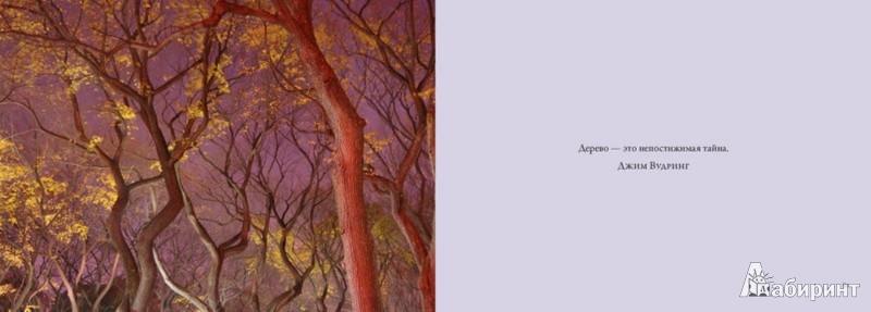 Иллюстрация 1 из 3 для Деревья. Красота и гармония - Lisa Purcell | Лабиринт - книги. Источник: Лабиринт