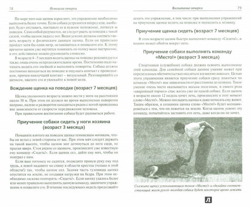 Иллюстрация 1 из 5 для Немецкая овчарка. Сила и преданность - Кремер, Вииннинг | Лабиринт - книги. Источник: Лабиринт