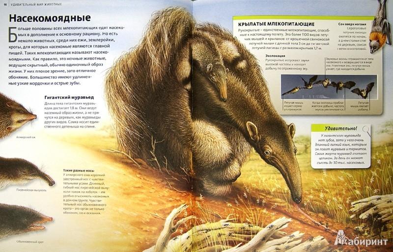 Иллюстрация 1 из 37 для Удивительный мир животных | Лабиринт - книги. Источник: Лабиринт
