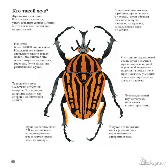 47 для в мире жуков интересные факты о
