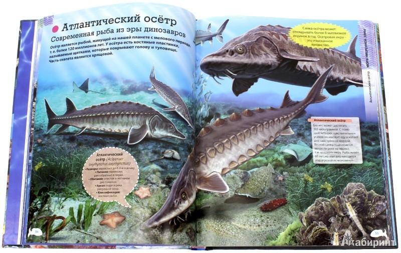 Иллюстрация 1 из 13 для Животные морей и океанов - Кармен Родригес | Лабиринт - книги. Источник: Лабиринт