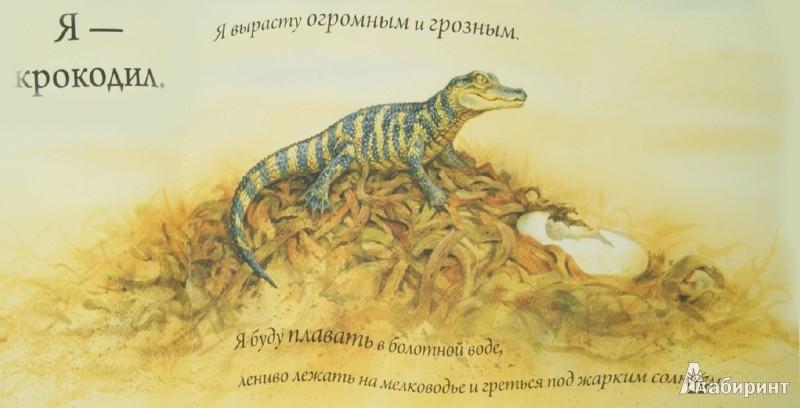 Иллюстрация 1 из 25 для Кто спрятался? | Лабиринт - книги. Источник: Лабиринт