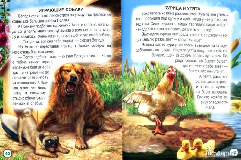 Иллюстрация 1 из 8 для Рассказы о животных | Лабиринт - книги. Источник: Лабиринт