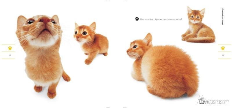 Иллюстрация 1 из 15 для Кошки. Само обаяние | Лабиринт - книги. Источник: Лабиринт