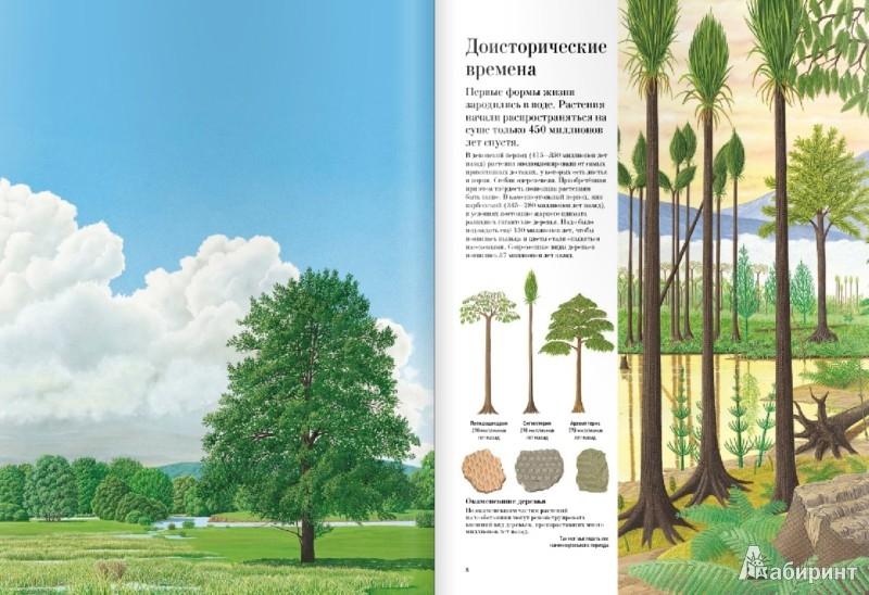 Иллюстрация 1 из 42 для Большая книга о лесах и деревьях - Рене Меттле | Лабиринт - книги. Источник: Лабиринт