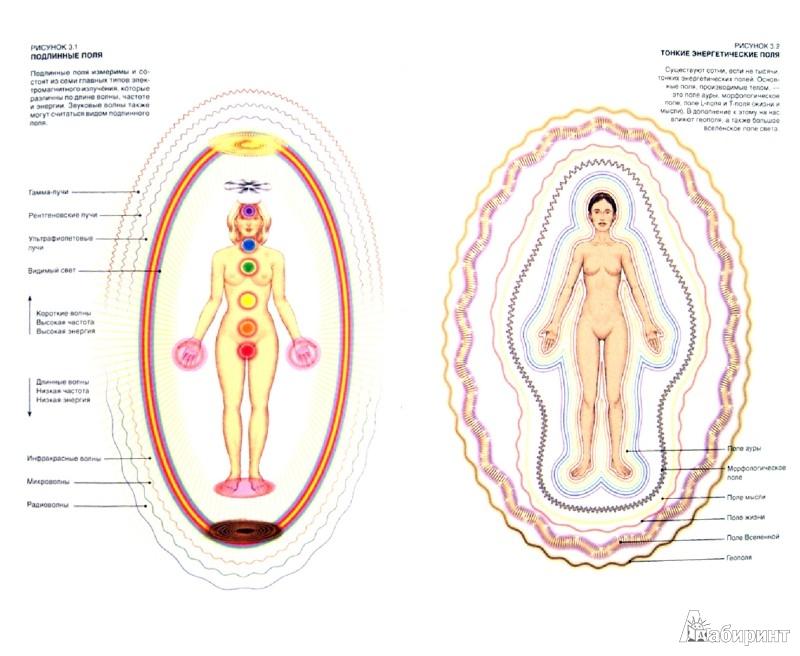 Иллюстрация 1 из 30 для Тонкое тело: Полная энциклопедия биоэнергетической медицины - Синди Дэйл | Лабиринт - книги. Источник: Лабиринт