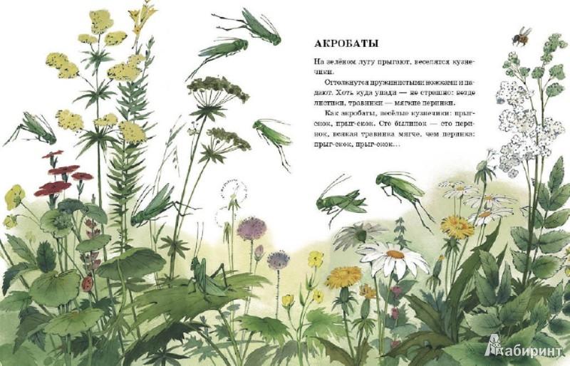 Иллюстрация 1 из 36 для Телеграмма - Анатолий Тумбасов | Лабиринт - книги. Источник: Лабиринт