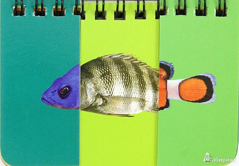 Иллюстрация 1 из 3 для Рыбы. Собери картинку | Лабиринт - книги. Источник: Лабиринт