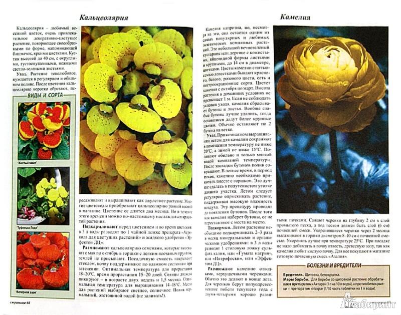 Иллюстрация 1 из 14 для Все о цветах в вашем доме - Октябрина Ганичкина | Лабиринт - книги. Источник: Лабиринт